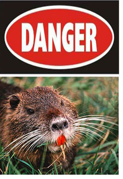 Danger - Swamp Rat